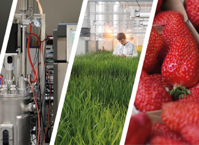 Biocontrôle : enjeux, leçons et perspectives