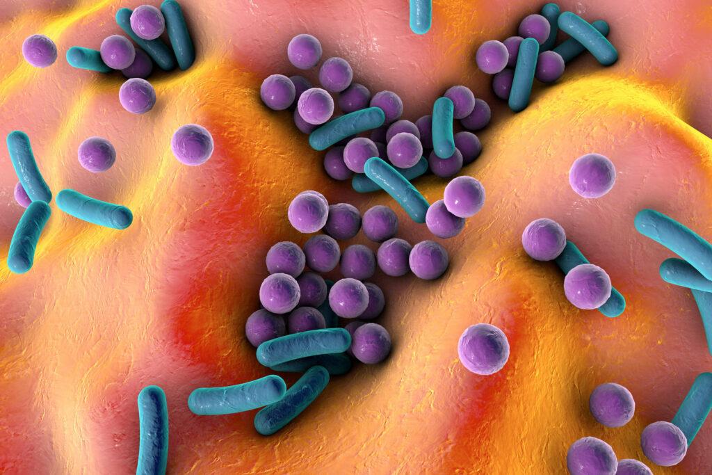 Impact de la nutrition sur le microbiote et les traitements.